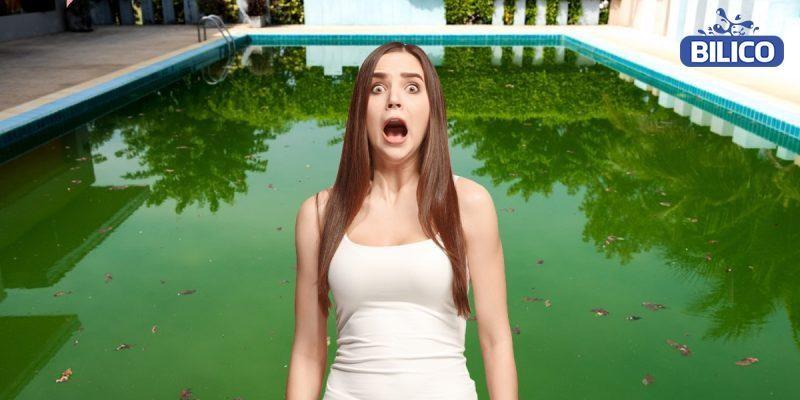 tác hại của tảo xanh với hồ bơi